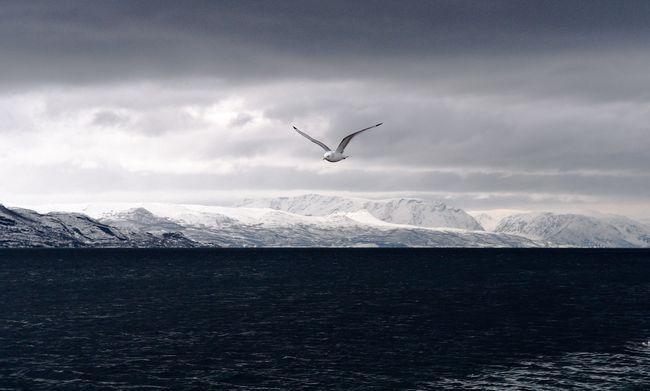 ┬®Olivier ANRIGO ville alta (norvege) Nikon D4 24-70mm   speed 200 aperture 13 70mm iso 2000-5-2